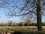 運動公園 広場