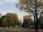 武蔵公園の色付き