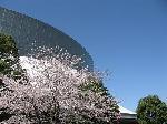 パークドームの桜