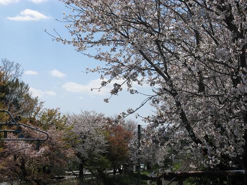 senrowaki