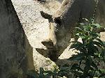 zoo-10
