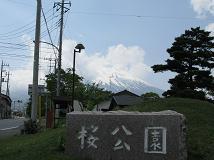 fuji-sakura