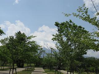 fuji-hazakura
