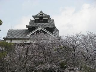 siro-sakura